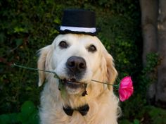 He's such a romantic <3