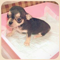 Baby tsuki♡  - @honey_013- #webstagram