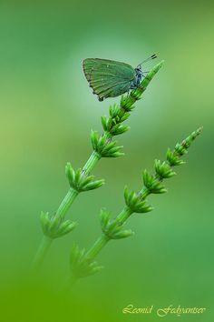 Shades of Green by Leonid Fedyantsev