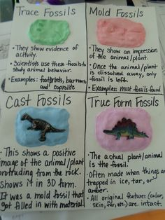 Four types of fossils for interactive journal
