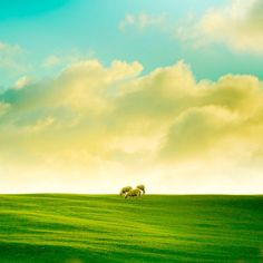 He makes me lie down in green pastures...