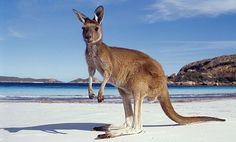 5+1 Must see Landmarks in Australia