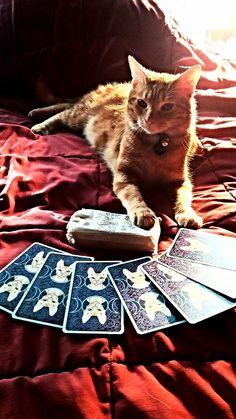 Kitty Tarot (Tarot of Pagan Cats)
