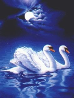 Swans By Moonlight >> 18 Best Swans Images Swans Beautiful Birds Animal Pictures