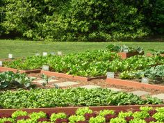 Gardening Idea Vegetable Garden >>> Read more by visiting the link on the image.