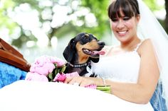 Best man´s dachshund ;) - Kleinburg Station Wedding at The Doctors House by MoxiePix Photos by Dana