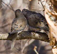 Doves kissing #garden #secretgarden