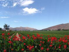 Kannas @Vanloverenwines Mountains, Wineries, Instagram, Places, Nature, Travel, Real Estates, Nice Asses, Wine Cellars