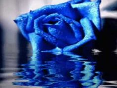 Animated Gif by John Diaz Greek Music, My Favorite Color, Animated Gif, Dawn, Orchids, Blues, Colour, Flower, Rose