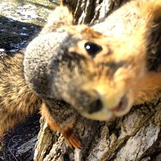 Michigan squirrels love to say hi!