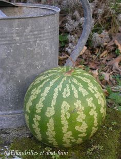 Watermelon Patch, Melons, Down On The Farm, Ainsi, Country Living, Countryside, Water Melon, Chutneys, Holland