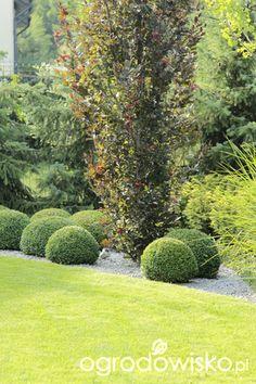 Ogród z lustrem Flower Beds, Ferns, Evergreen, Planer, Garden Ideas, Golf Courses, Backyard, Gardening, Flowers