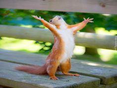 Image result for animal praying