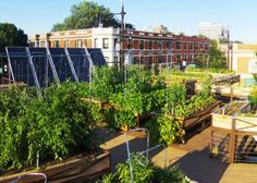 Green Roofs Are So Last Year; Rooftop Farms Are The Growing Thing : TreeHugger