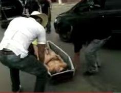 Caixão cai de carro funerário no meio de avenida com corpo dentro