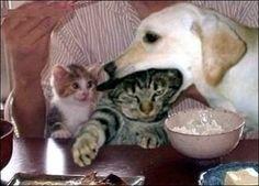 Hey~ don't eat my mom!!