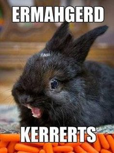Kerrerts - the best way to start your day!