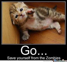 lol funny cat meme