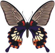 butterfly vector-nature (LIFE)