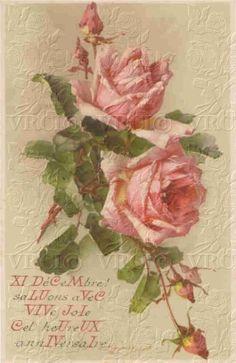 Attic Roses 143-