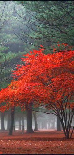Stunning Views: Red forest