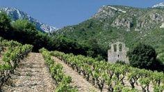Cave de Castelmaure - Notre sélection de vins Octobre 2015