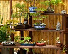 brise-vue bambou et jardin vertical en bonsaïs dans le jardin