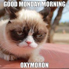 Grumpy Cat Oxymoron