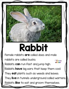 RABBITS and MAMMALS - Animal Reports and non-fiction reading and writing for kindergarten - first - Design interests First Grade Reading Comprehension, First Grade Writing, Reading Comprehension Worksheets, Kindergarten Writing, Teaching Writing, Teaching Ideas, Literacy, Nocturnal Animals, Zoo Animals