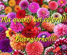 Immagini Belle Di Buongiorno - Pocopagare.com Facebook, Plants, Plant, Planets