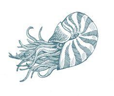 Sea Creature Drawings | Tuesday, June 1, 2010