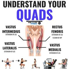 The Quadriceps are 4 (obviously) muscles that work together to extend your knee. They are a strong muscle group that often gets overly tight and pulls hard on the lonely tendon trying to hold them. Gym Workout Chart, Gym Workout Tips, Workout Challenge, Fun Workouts, Lifting Workouts, Workout Abs, Street Workout, Workout Routines, Quad Muscles