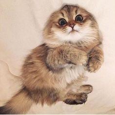 Резултат с изображение за cats
