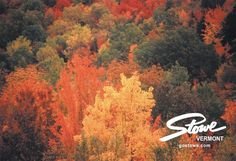 Autumn is close at hand - soon our mountains will be filled with colors like these! http://www.gostowe.com/autumn