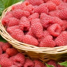Raspberry 'Tulameen' (6 canes)
