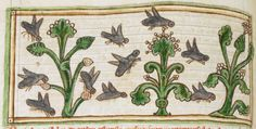 Bees detail from medieval illuminated manuscript, British Library Harley MS 3244, 1236-c 1250, f58v