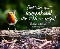 Psalm 150:6 Psalm 150, Psalms, Inspirational Qoutes, Afrikaans, Sunday School, My Life, Bible, Christian, Journaling