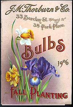 Vintage Seeds & Bulbs Catalogue - 1906 ~ purple iris and daffodils