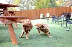 You won't see dogs off-leash at most Denver bars, but a couple of them have special enclosures.