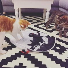 New Challenge: #whatimdoingnow - thx @katerluki & new toy: thx @revvet_de  #luckythecat #charliethecat #love #cute #catsofsalzburg #unterfoehring #germany #cat #cutecatcrew #ilovemypet #catlovers #lovekittens #instapet #catsagram #kitten #kitty #catstagram #kittycat #catsofinstagram #ilovemycat #catlove #catoftheday #furry #cats_of_instagram #cats #catlife #katze #katzenliebe #allesfürdiekatz