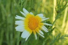 een kleine bloem kan toch veel stuifmeel bevatten