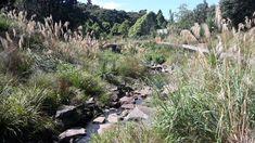 La Rosa Reserve Stream Daylighting by Boffa Miskell «  Landscape Architecture Works | Landezine