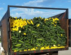 Farm-to-food-bank programs are now saving 300 million pounds of ugly and surplus produce a year in more than 20 states.