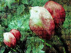 'burst of buds' von ursfoto bei artflakes.com als Poster oder Kunstdruck $16.63