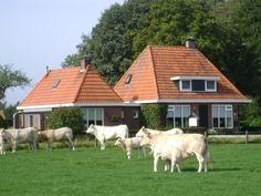 2-4 pers.ruime sfeervol ingerichte vakantiewoning in Twente Pers, Cow, Facebook, Animals, Animales, Animaux, Cattle, Animal, Animais