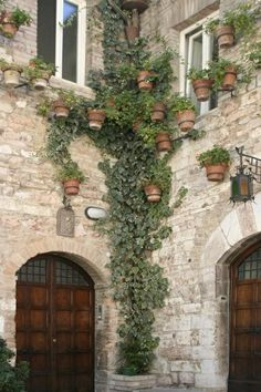 Ivy in Assisi Italy...  I wonder :)