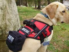 Service Dog Starter Package Harness Vest