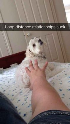 To stay connected. | 32 Pics That Prove Every Pet Owner Should Use Snapchat