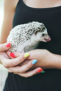 Hedgehog by Jovana Rikalo - Stocksy United Super Cute Animals, Like Animals, Cute Baby Animals, Funny Animals, Happy Hedgehog, Cute Hedgehog, Pygmy Hedgehog, Paws And Claws, Little Critter