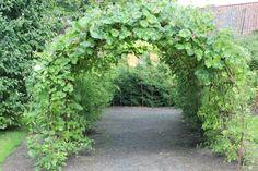 hagen vår: Grønne huler